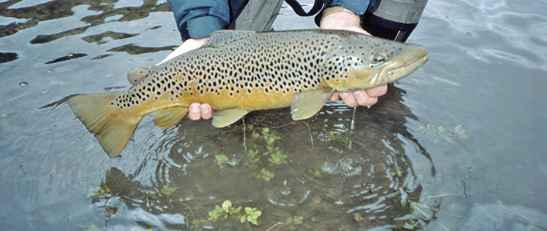 Stocked Trout Streams Fly Fishing Report - November 26, 2019
