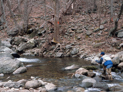 Mountain Trout Streams Fly Fishing Report - April 4, 2019