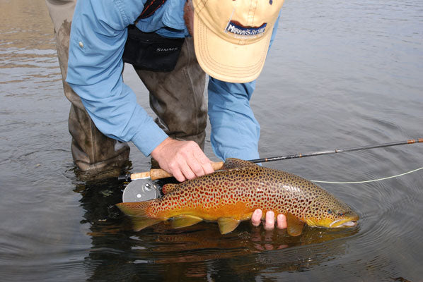 Delayed Harvest and Stocked Trout Streams Fly Fishing Report- November 14, 2017