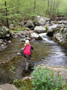 Brook Trout Fishing in the Shenandoah National Park