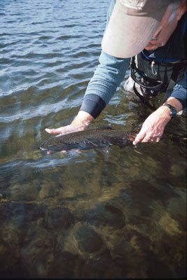Virginia Fly Fishing Report for Trout
