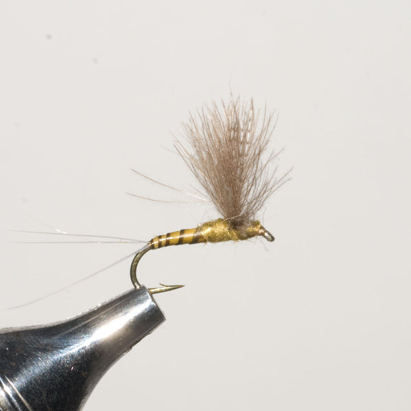 CDC Blue Wing Olive