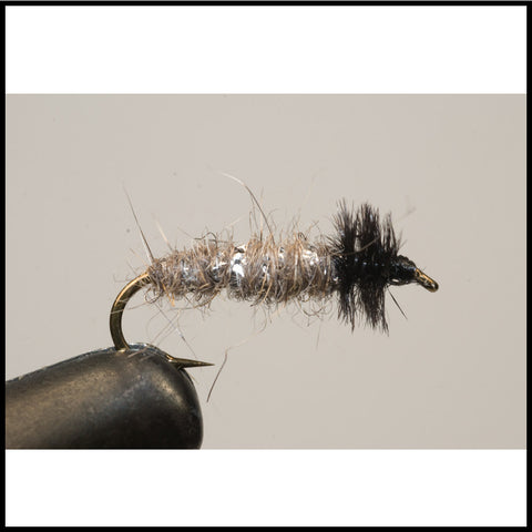 Murray's Caddis Larva