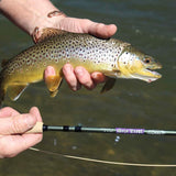 St. Croix Mojo Trout Fly Rod Series
