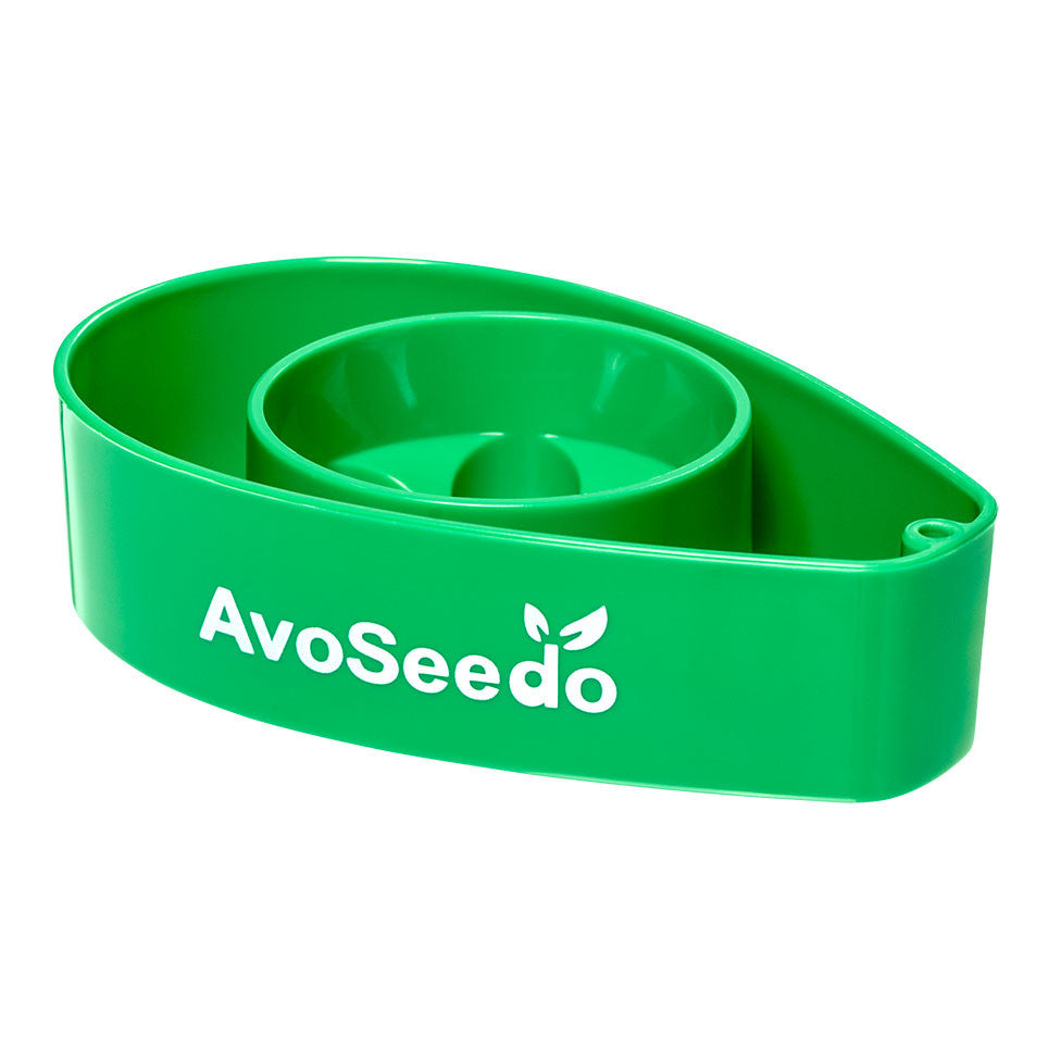 Avoseedo (Green) Grow Your Own Avocado Tree. Only £9.99 | Uberstar UK