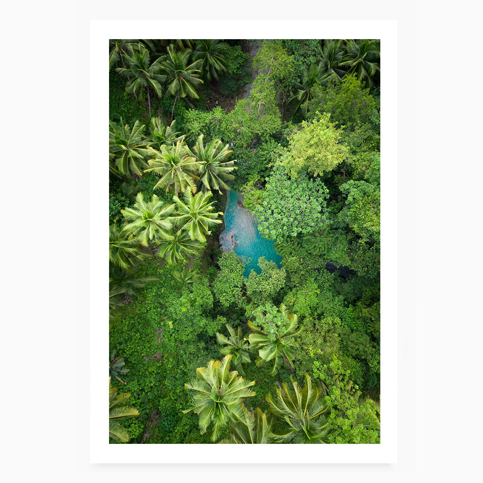 Rainforest Escape II