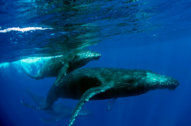 Whales - Matted Print