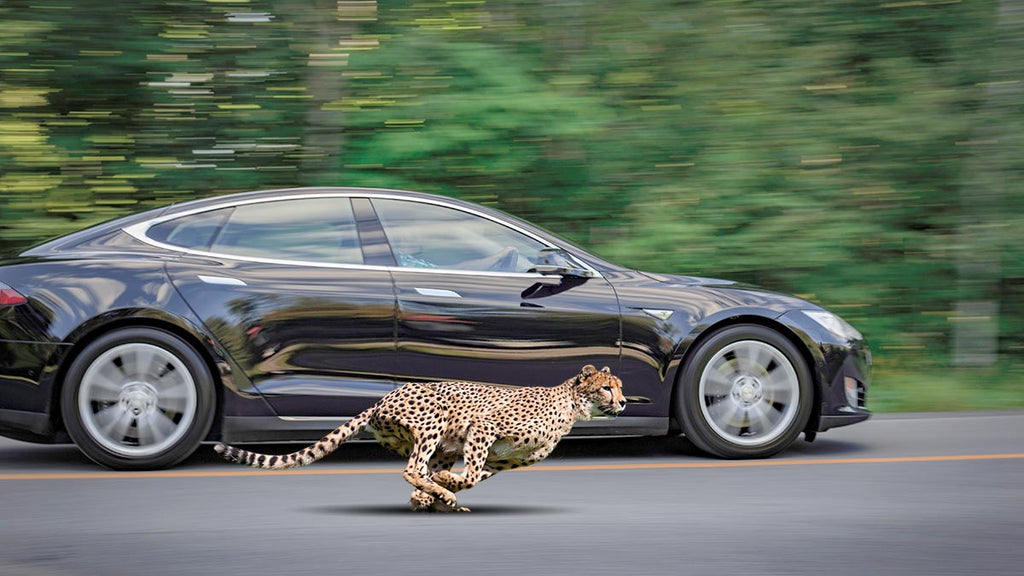 Tesla Model S depiction of the Cheetah Stance.