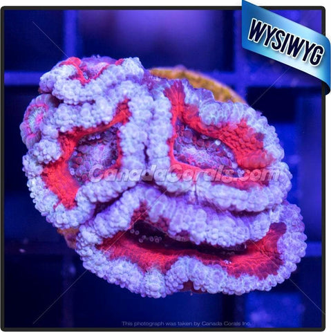 Recycled Glass Acan Lord WYSIWYG 3