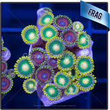 Assorted Bright Zoanthid Frag