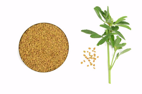 Organic Fenugreek Seeds, Whole - Spicely Organics  - 1