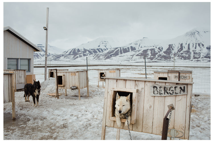 Dog yard in Svalbard