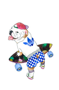 Bull Terrier on a skateboard