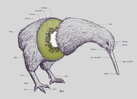 Threadless - KIWI ANATOMY T-Shirt