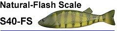 "Bear Creek 8"" Perch Spearing Decoy Natural Flash Scale (Includes 1 Decoy) S40-FS"