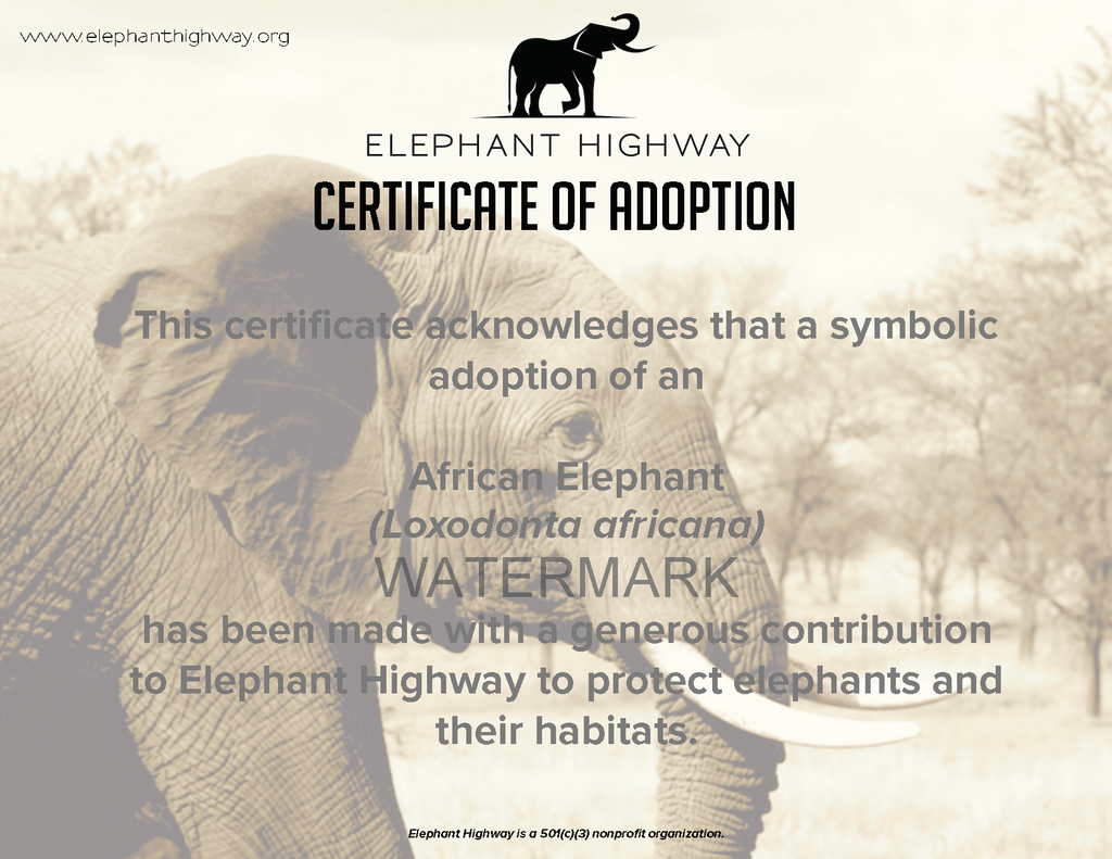 Big Elephant Adoption Package