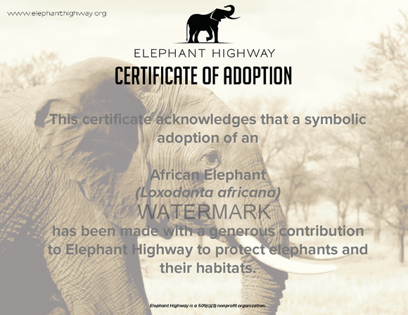 Big Elephant Adoption Package - Elephant Highway  - 1