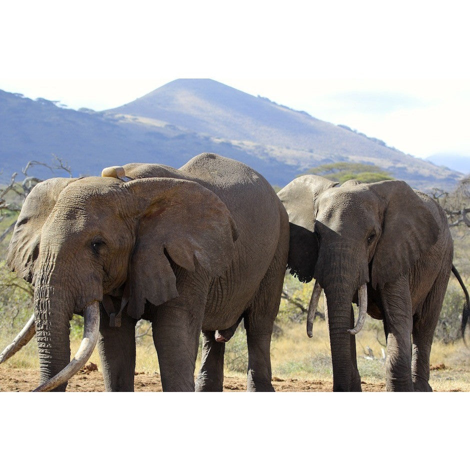 Little Elephant Adoption Package - Elephant Highway
