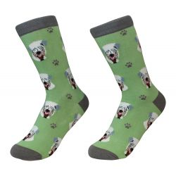 Socks Wheaton Terrier