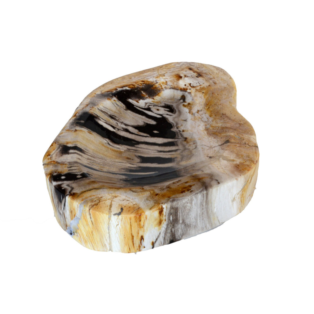 Mammoth Petrified Wood Nowl