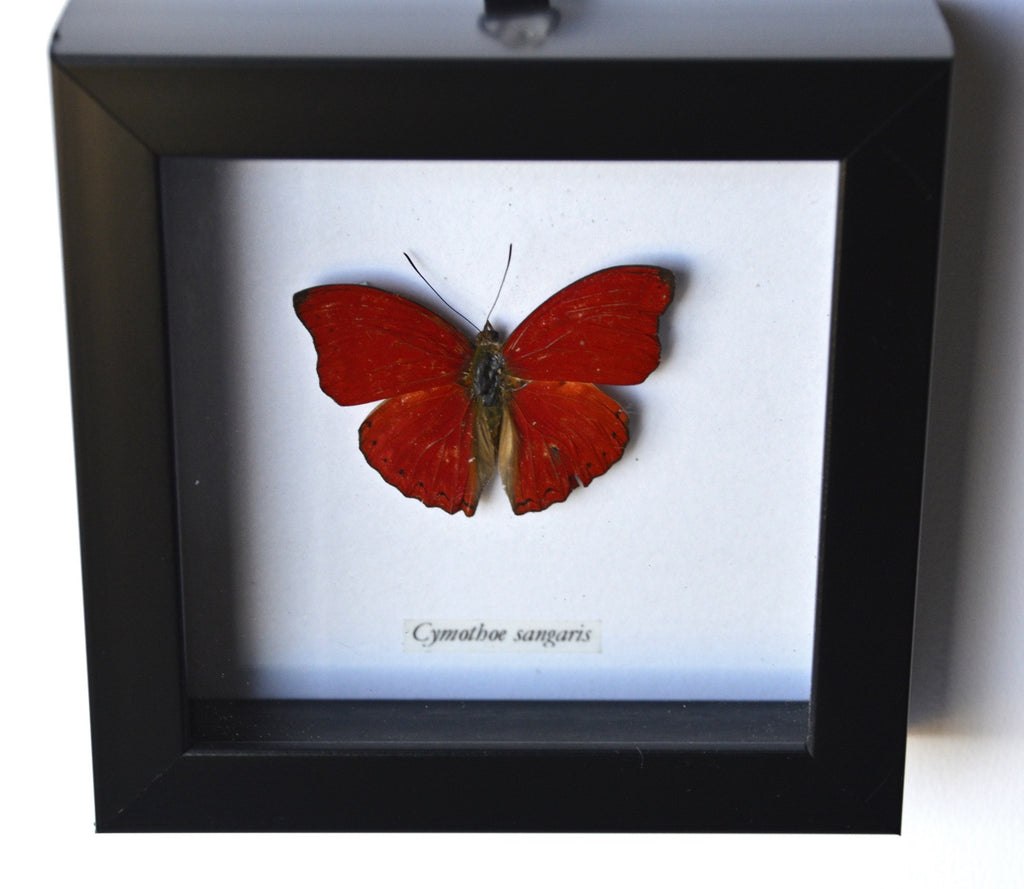 Red butterfly in black frame