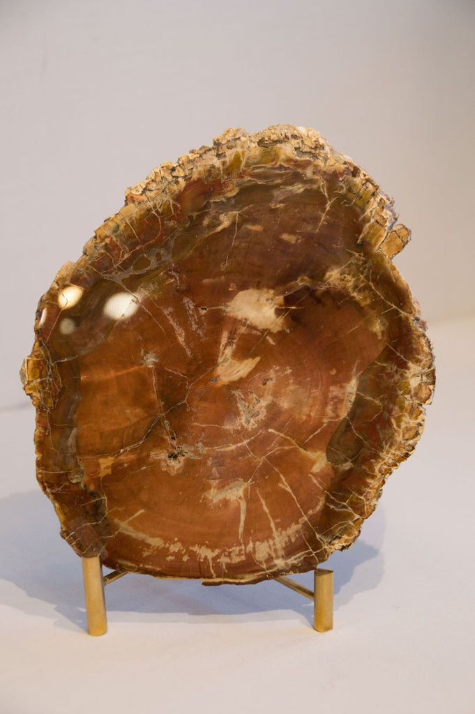 Umber Petrified Wood Slice