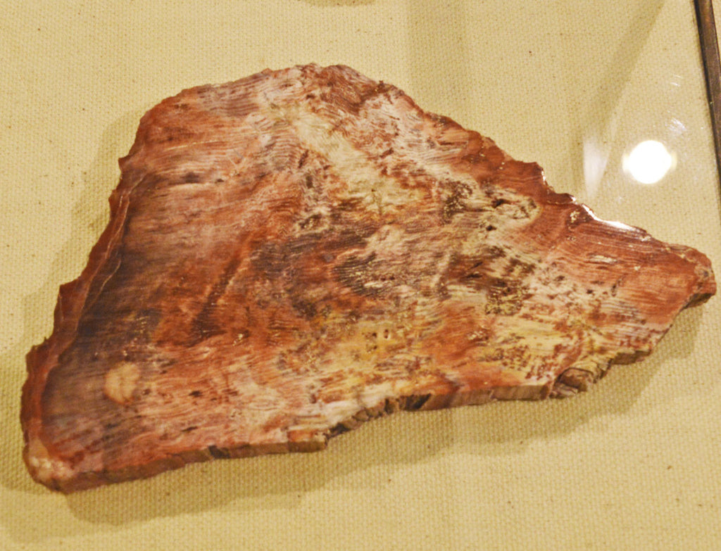 Elko Nevada Petrified Wood