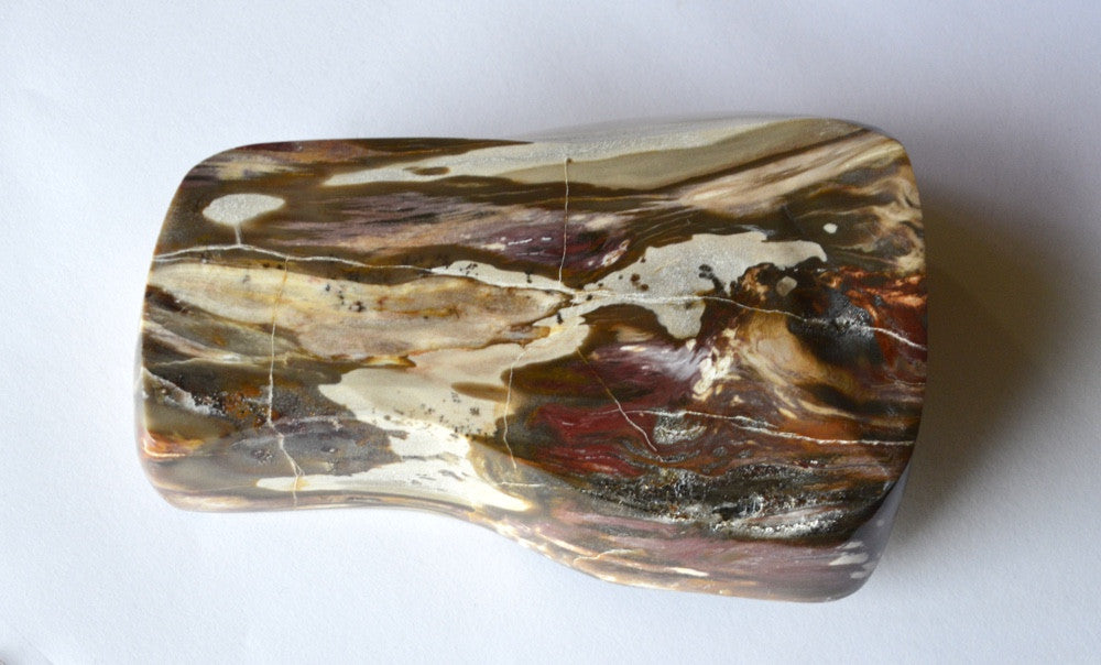 polished bottom of petrified wood dish