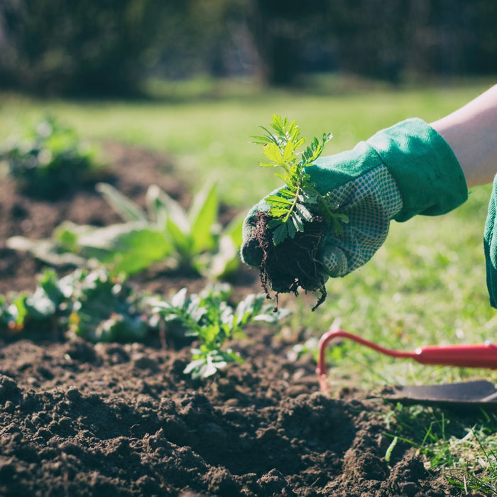 Top gardening mistakes beginners make