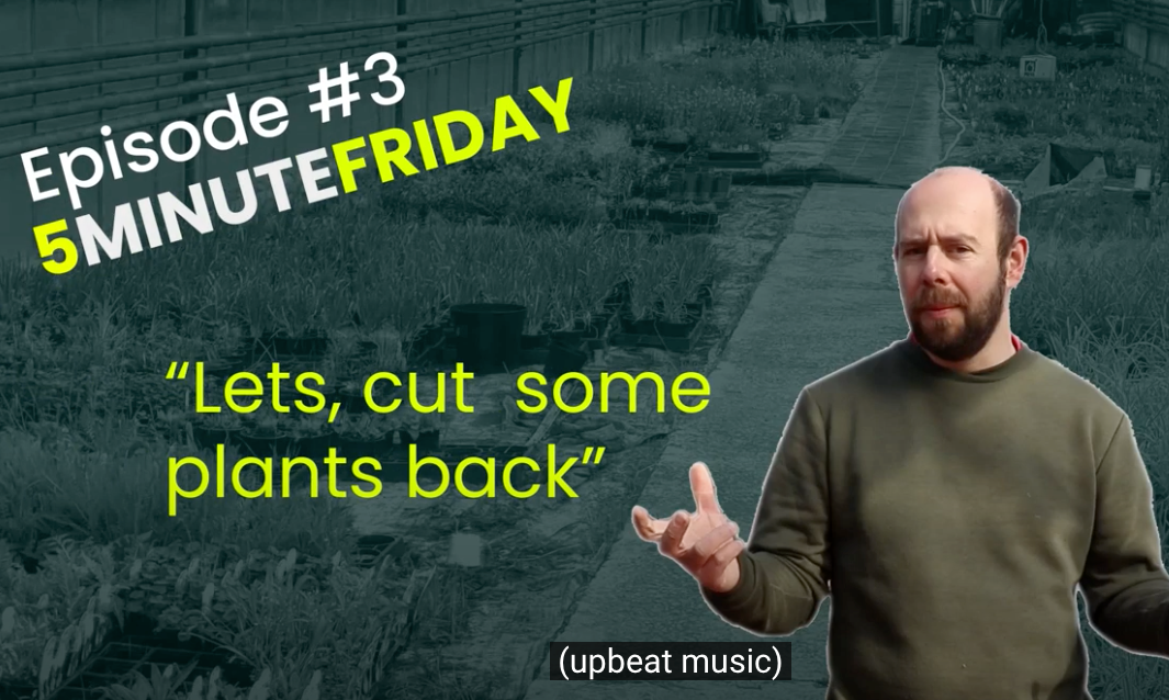 EP4 - Let's cut back some plants! #5MINUTEFRIDAY
