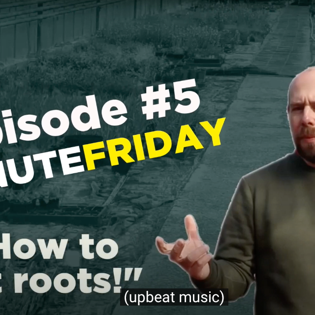 EP5 - How to cut roots easily! #5MINUTEFRIDAY
