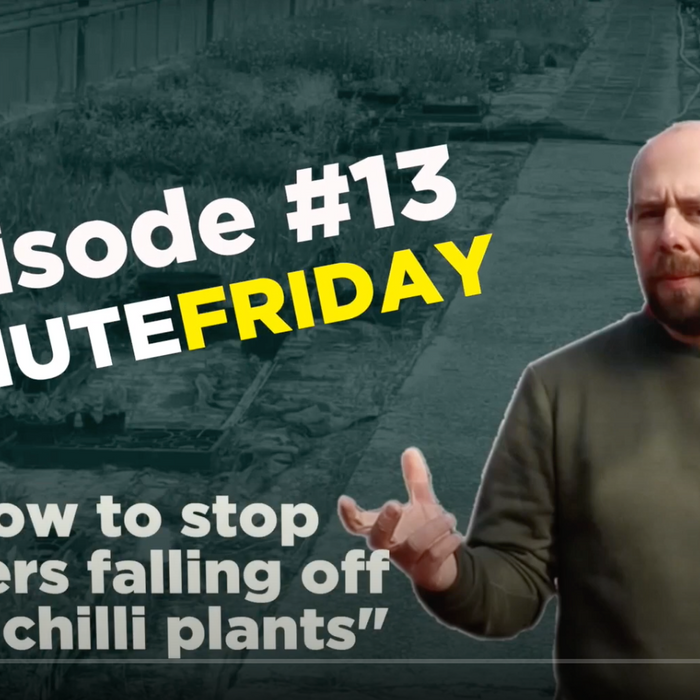 EP13 - Why are the flowers falling off your chilli plants? #5MINUTEFRIDAY