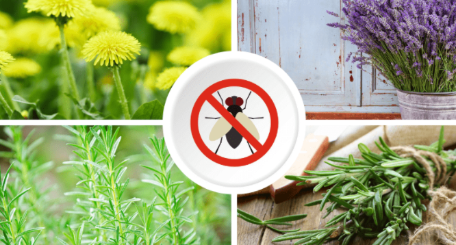 How to STOP Flies on your plants!