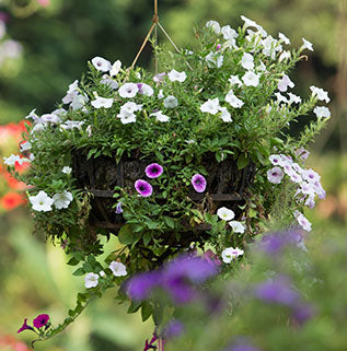 Hanging Basket and Patio Plants