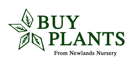 BuyPlants.co.uk
