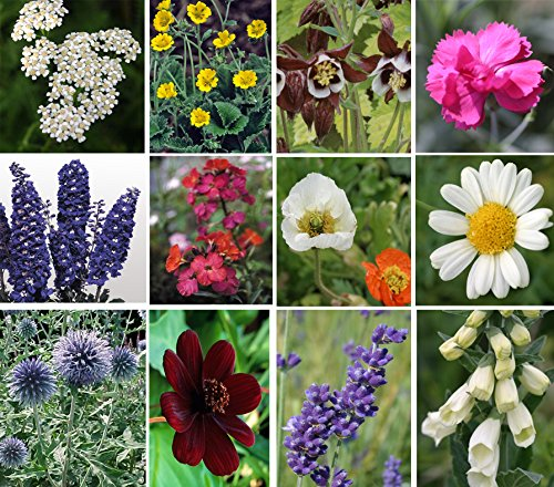 Selection of perennial starter plants