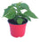 Example of extra hot chilli plant in 9cm pot