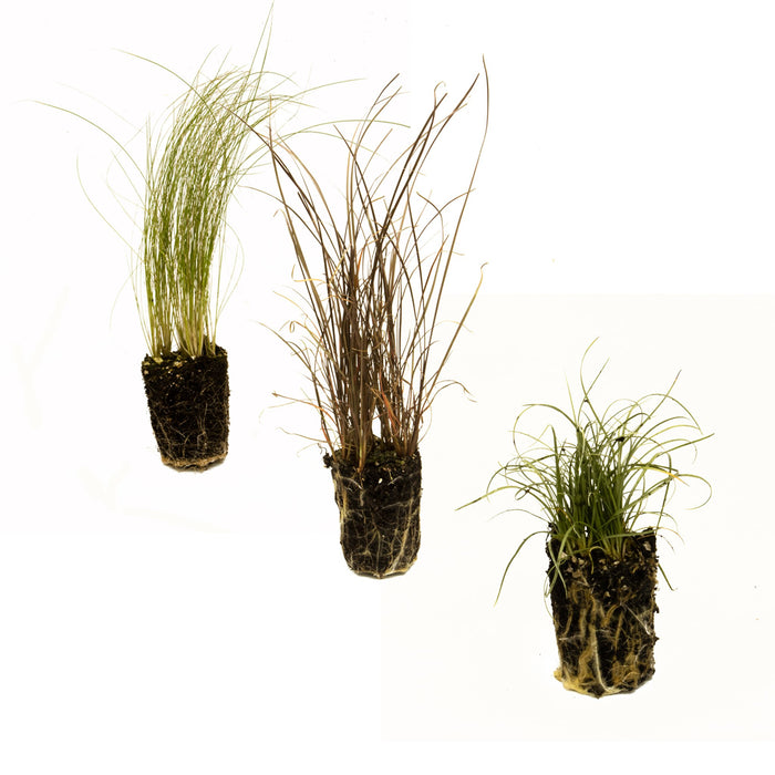 Collection of grass plug plants
