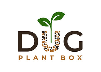Dug plant box October