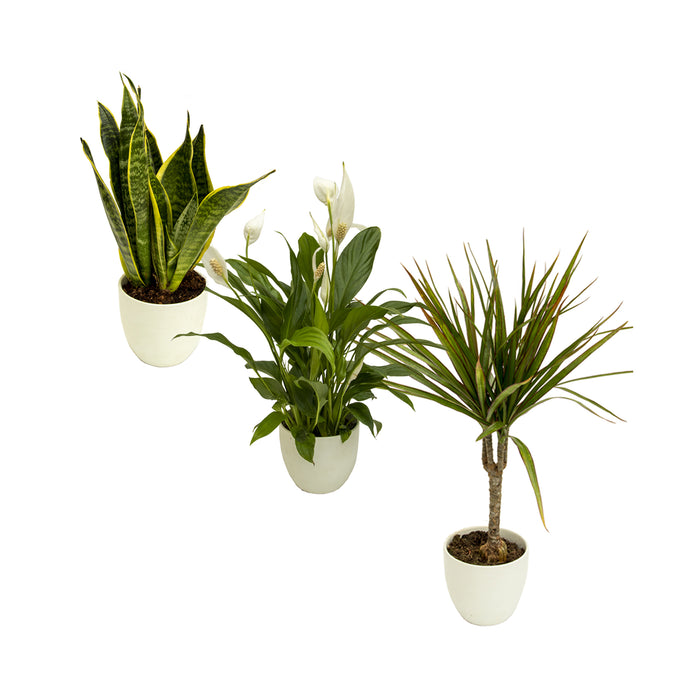 Easy to care for house plant collection
