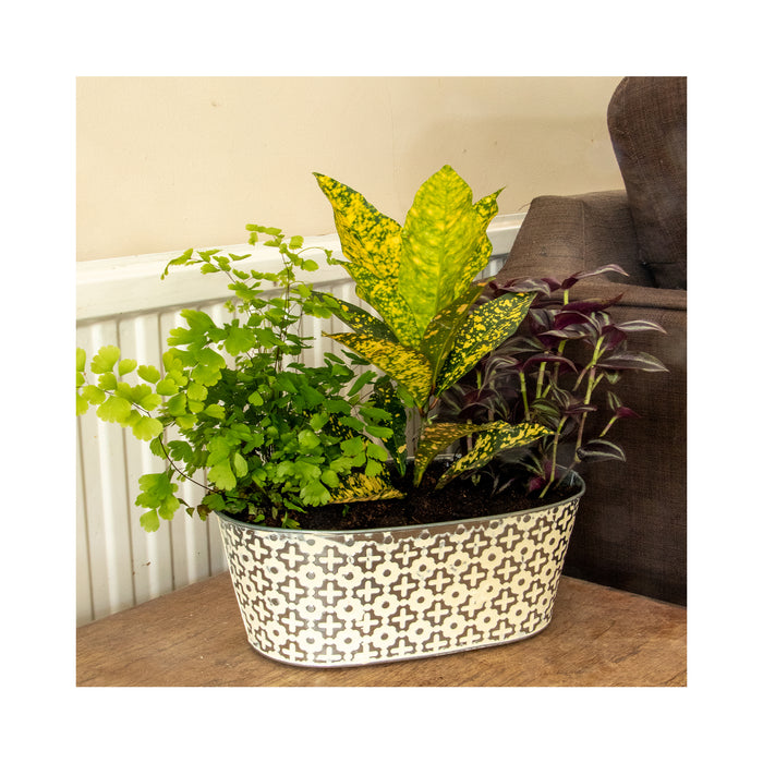 House Plant Container Kit - From Dug Plant