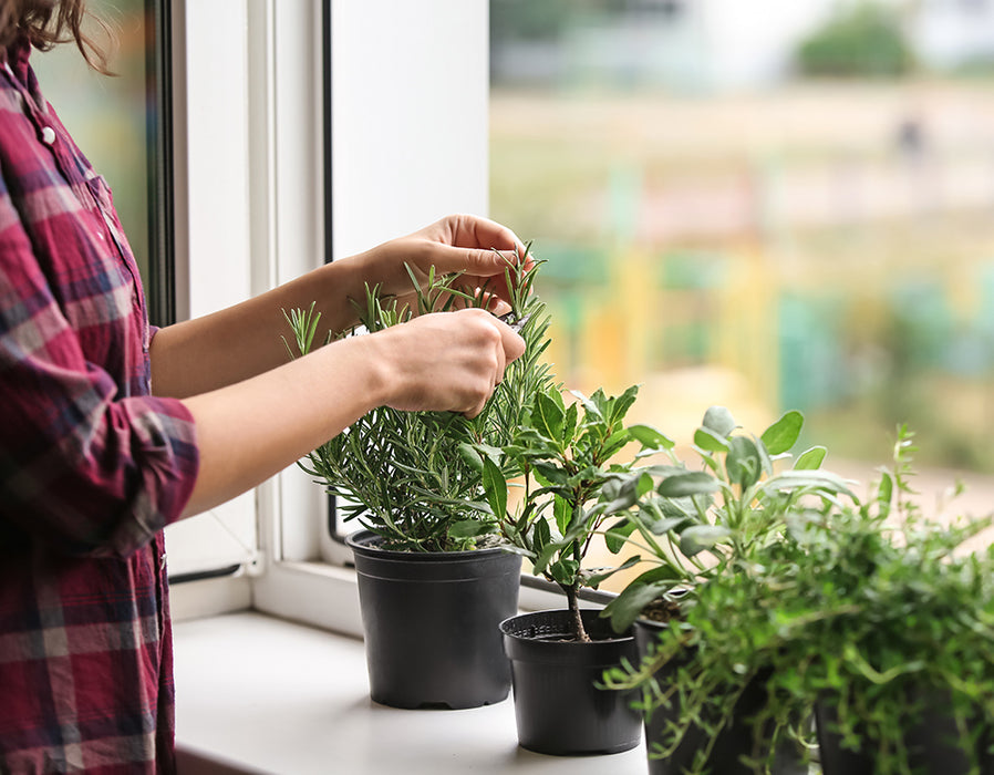 Image of someone caring for herb plants