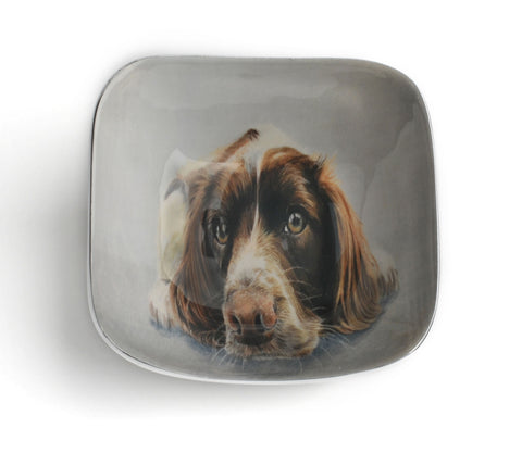 Springer Spaniel Square Bowl (Trade min 4 / Retail min 1)