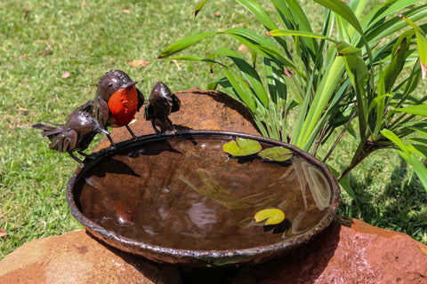 Red Robins Bird Bath / Bird Feeder