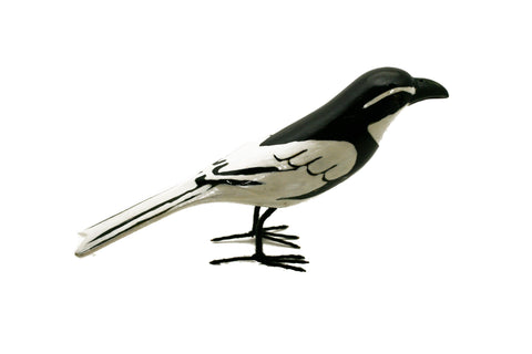 Painted Pied Wagtail Small (trade min 2)