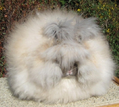 Angora Rabbit Registration