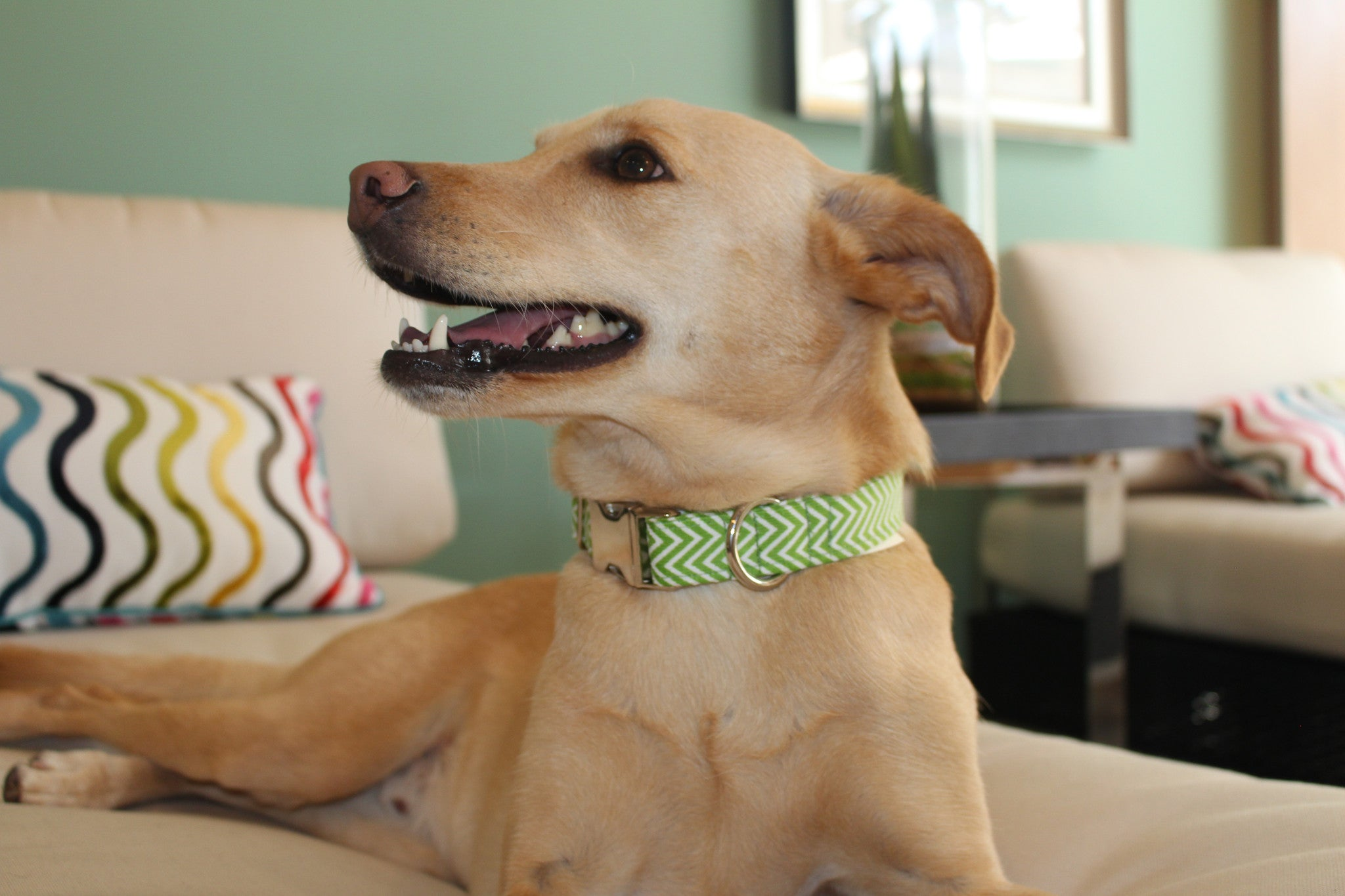 Bark4Green Pack Collar