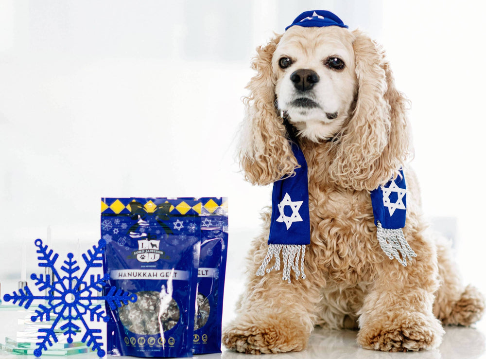 Best Ways to Celebrate Hanukkah with Your Dog | Top 5 Hanukkah Gifts for Dogs