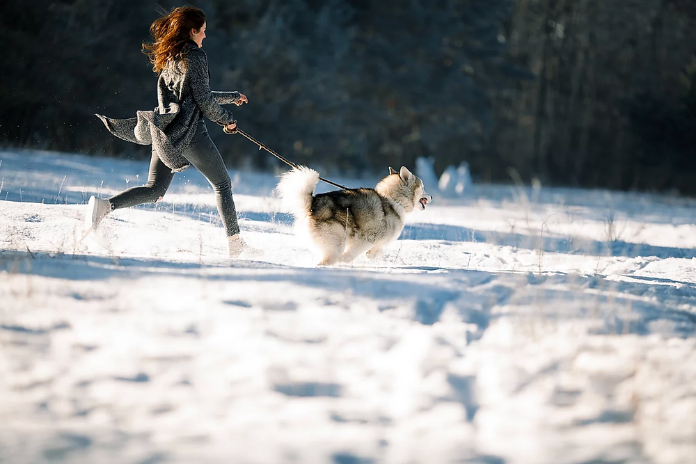 We Believe Dogs Are The Best Workout Companion.
