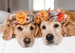 10 Dogs on Instagram That We Love